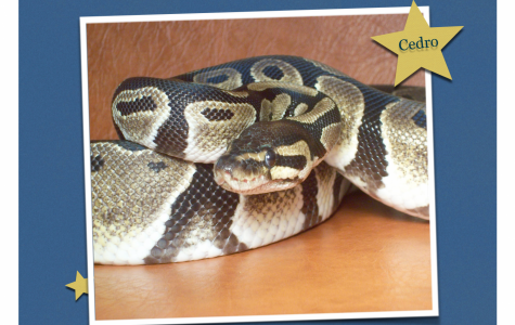 Science Department Looking to Find a Home for One of Their Snakes