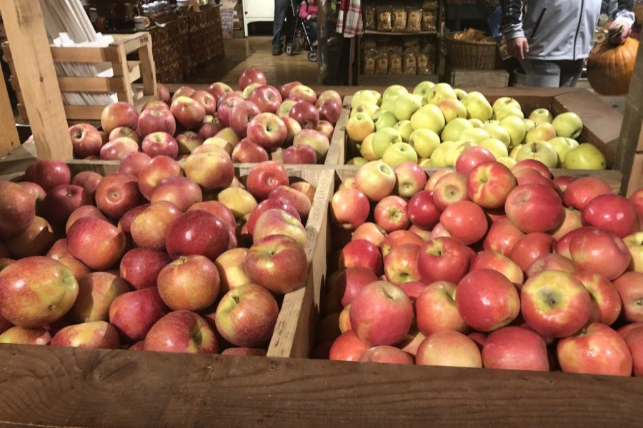 In+addition+to+a+pumpkin+patch%2C+Vala%27s+offers+an+apple+orchard+with+fresh+apples+that+are+featured+in+their+caramel+apples+and+also+available+to+be+picked+by+visitors.+