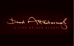 David Attenborough's new documentary, A Life on Our Planet, was released on Oct. 4.