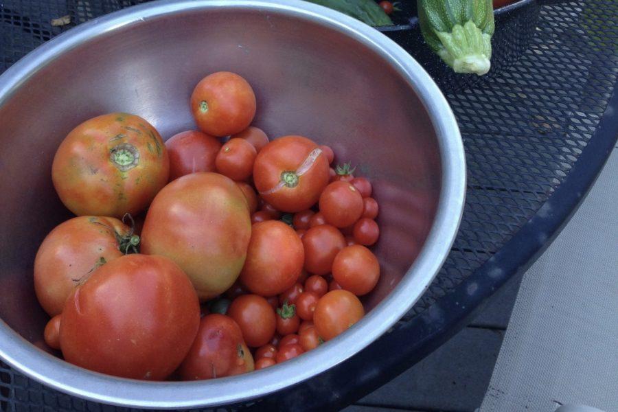 Vegetables grown by math instructor Michael Nolette.