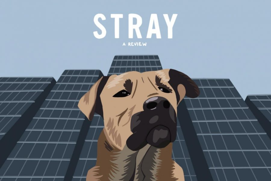 %E2%80%9CStray%22+is+the+latest+documentary+from+director+Elizabeth+Lo%2C+following+the+journey+of+stray+dogs+in+Turkey.